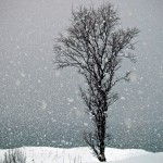 Snow falling on tree