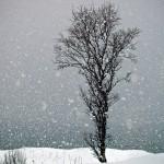Snow falling on tree