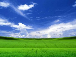 fields of green nature sky