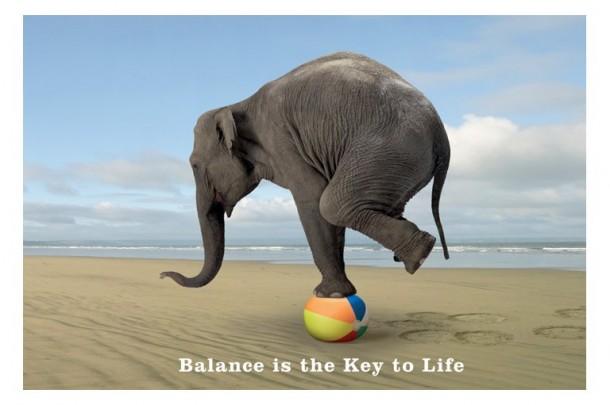 balance elephant