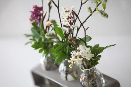 flower vases inside plants