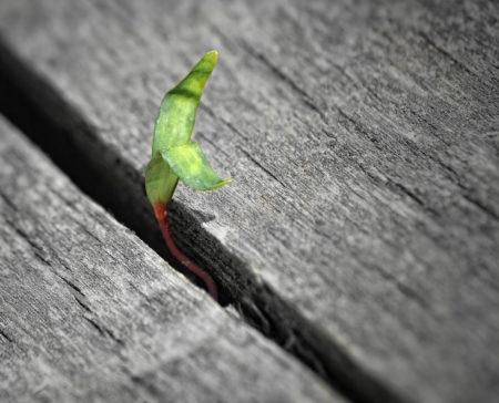 plant seed grow