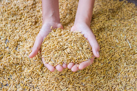 Rice in Hands, Shutterstock purchase