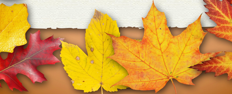 autumn-922378