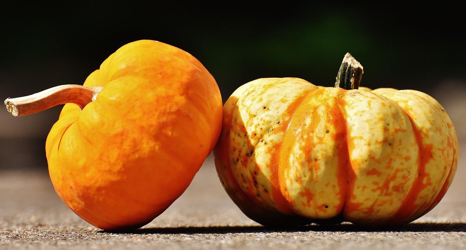 pumpkins-thanksgiving