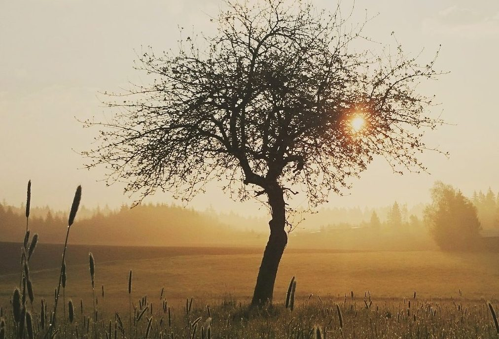 tree-1409101_1920