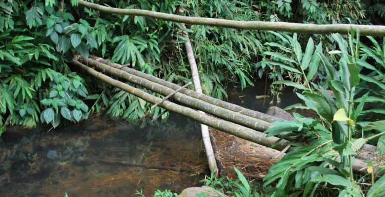 Bamboo bridge over a creek with bamboo hand rail.